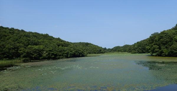 湿地の多面的価値評価軸の開発と広域評価に向けた情報基盤形成