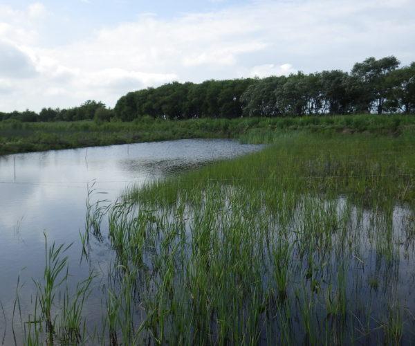 フォーラム「気候変動時代の自然環境保全と水防災」記録映像の公開
