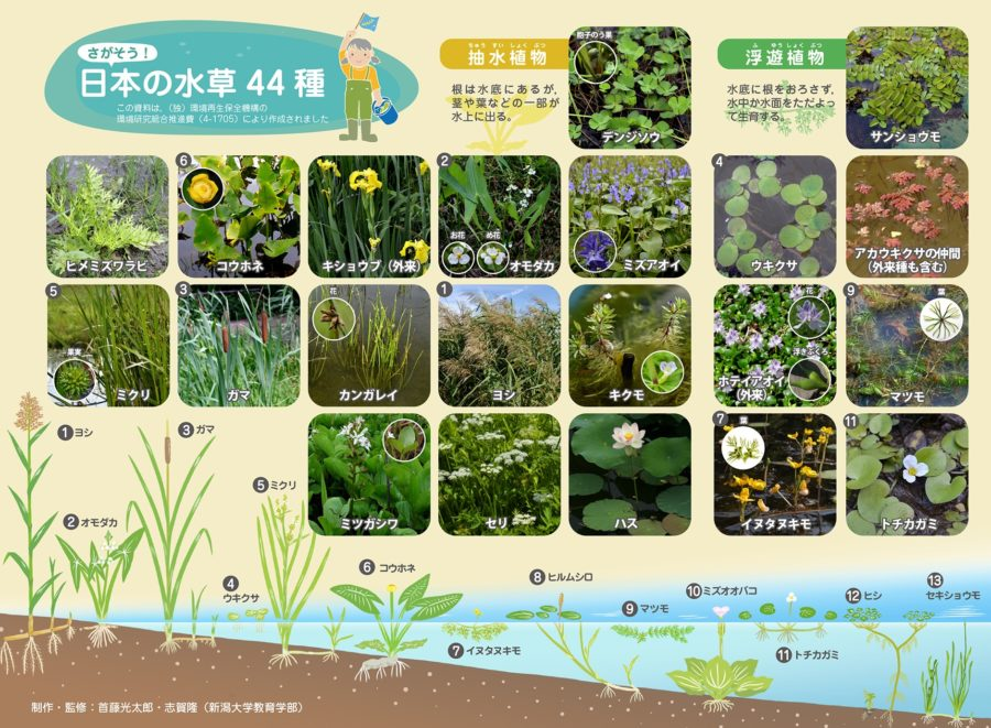 さがそう!日本の水草44種
