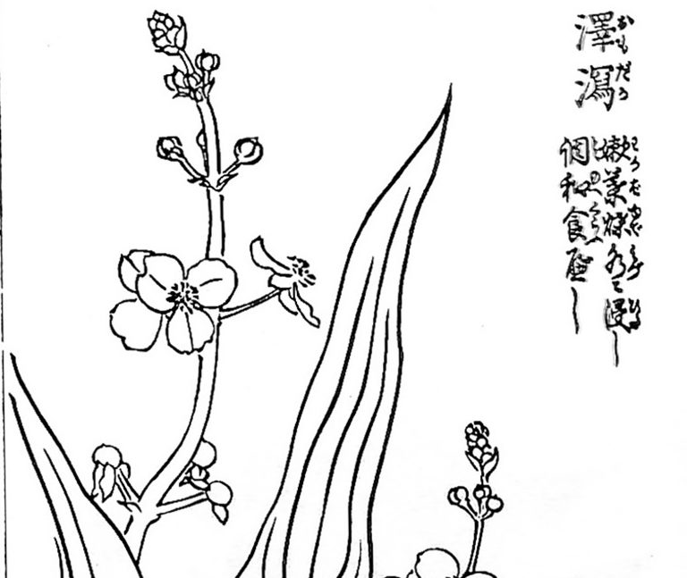 救荒植物データベース ver190415