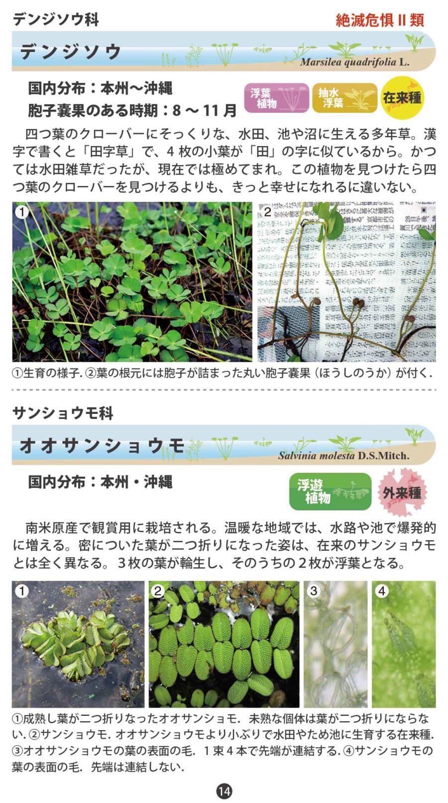 水草ハンドブック(14-25ページ)分割高画質版
